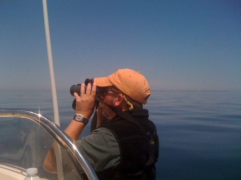 Searching for tuna