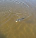 Skinny water bass
