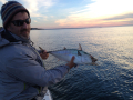 Early morning fish off Falmouth Cape Cod